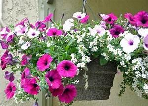Fleur D Hiver Pour Jardinière : fleur suspendu exterieur fleur en pot pour terrasse ~ Dailycaller-alerts.com Idées de Décoration