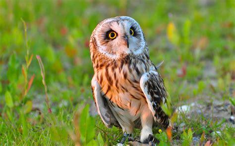 Animated Owl Wallpaper - owl wallpapers wallpapersafari