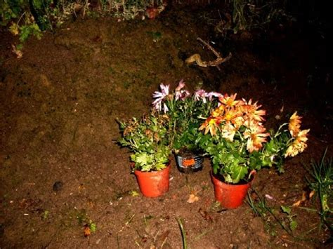 Garten-anders: Verblühte Herbstastern Sind Winterhart