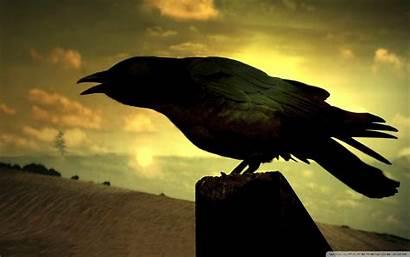 Raven 4k Desktop Bird Wallpapers Eagle Ultra