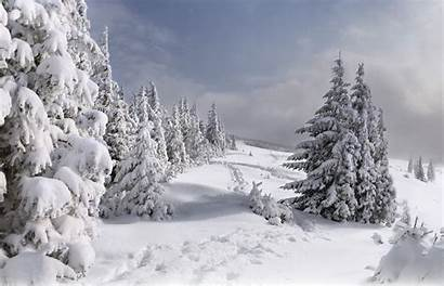 Snow Christmas Tree Covered Winter Wallpapers Nature