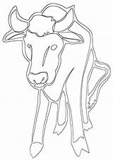 Buffalo Coloring Pages Coloringway sketch template