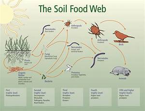 Supporting Biodiversity In The Soil Food Web