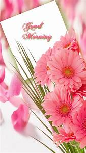 Good morning with pink flower - FreeProducts