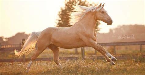 pferde hintergruende kostenlos herunterladen bilder und