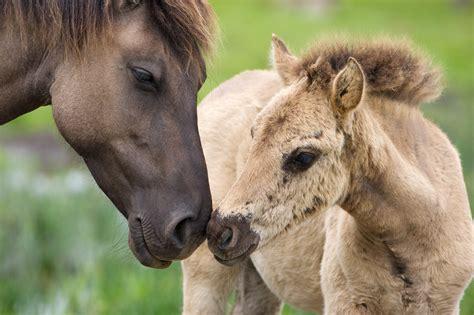 europe wildlife european wild bank horses bears help mha wonders hamblin mark rewildingeurope