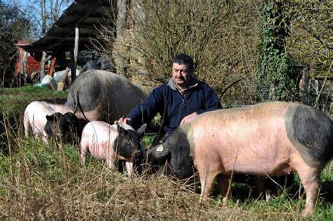 chambre d agriculture limoges la production de porcs cul noir se développe en limousin