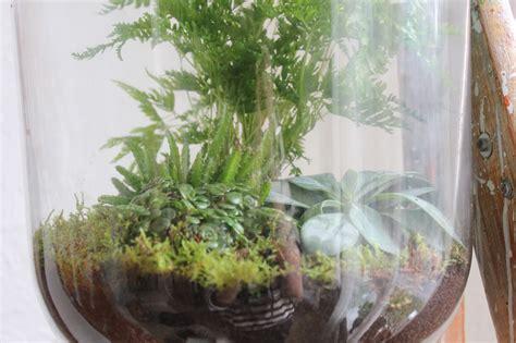 diy maak je eigen open terrarium het  waste project