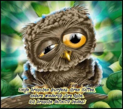 eulen bilder lustig kaffee und ruhe humor owl und morning