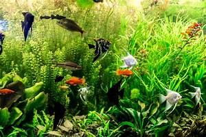 Sauerstoff Im Aquarium : s wasserfische zierfische haltung im aquarium zooplus ~ Eleganceandgraceweddings.com Haus und Dekorationen