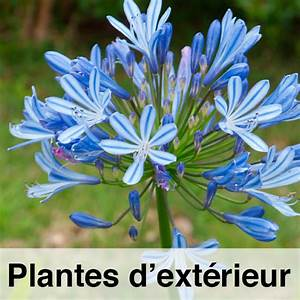 Plantes D39extrieur Tropicplantes