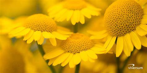 bedeutung gelbe kraft und bedeutung der farbe gelb viversum