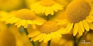 Die Farbe Gelb : kraft und bedeutung der farbe gelb viversum ~ Watch28wear.com Haus und Dekorationen
