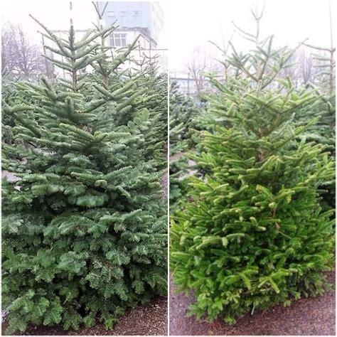 standard real christmas tree buy online cork christmas