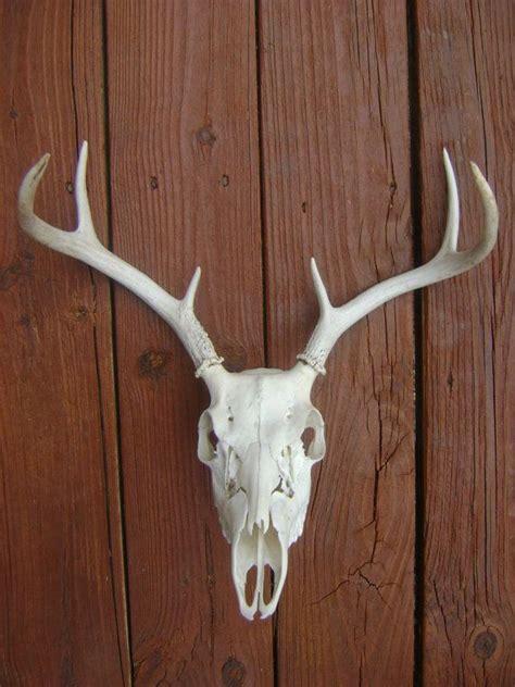 17 best images about deer skull decor on pinterest deer