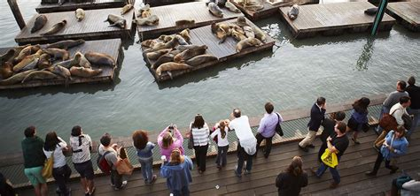 sea lion  anniversary guided tours pier