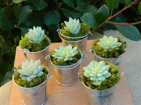 Succulent Wedding Favor Succulent Bridal Shower Favor