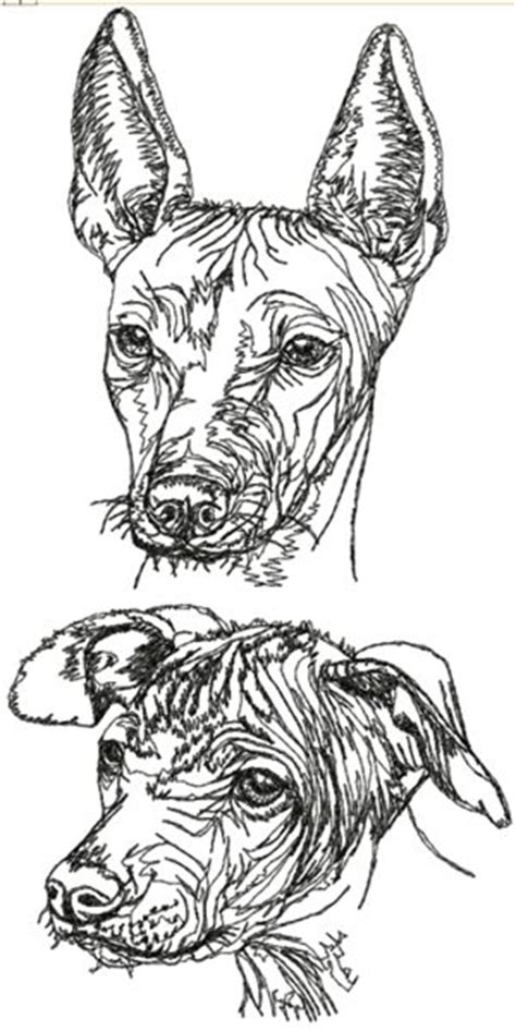 advanced embroidery designs mexican hairless dog