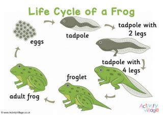 frog worksheets
