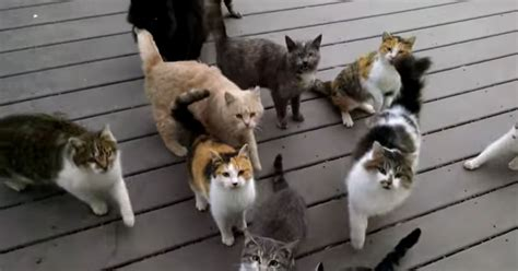 gang  kitty cats   damn dinner meow