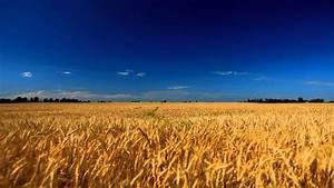 Экспорт украинской пшеницы в Азию растет - hyser.com.ua