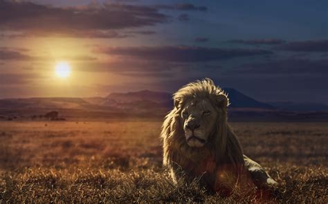 lion king wallpaper  wallpapers adorable wallpapers