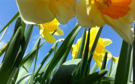 Už lango - pavasaris! - DELFI Pilietis