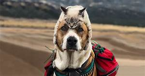 This Cat And Dog Love Travelling Together, And Their ...