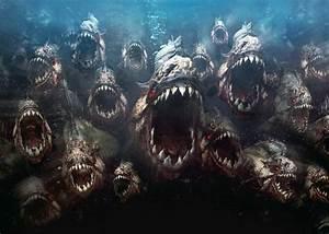 The Deadliest Piranha Attacks   Mysteriesrunsolved