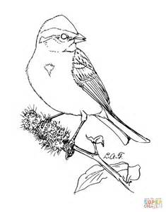 american tree sparrow coloring page  printable