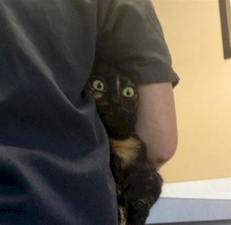 funny   cats   theyre hiding   vet