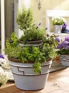 Gemüse Auf Dem Balkon : gem se und kr uter auf dem balkon pinterest kr uter ~ Lizthompson.info Haus und Dekorationen