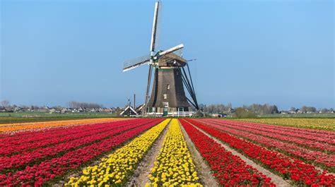 amsterdamse bloemen tulpen the story of park 21