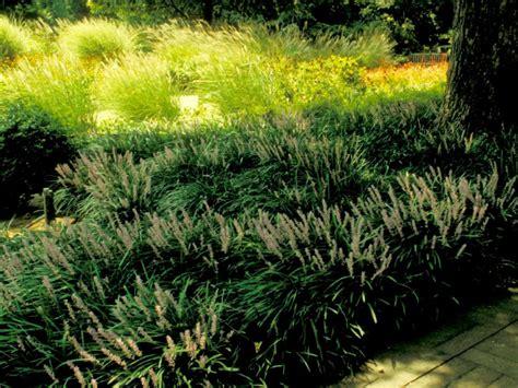 popular landscape plants popular landscaping groundcovers and shrubs diy