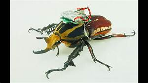 Remote-controlled Beetle