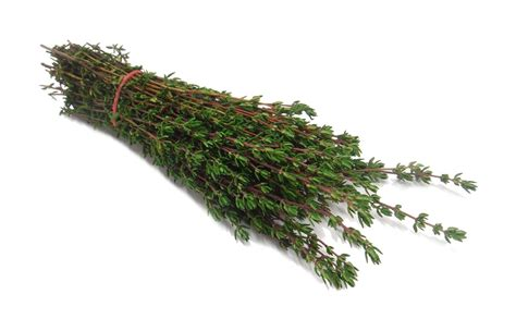Thyme Essential Oil, Red Ct. Thymol
