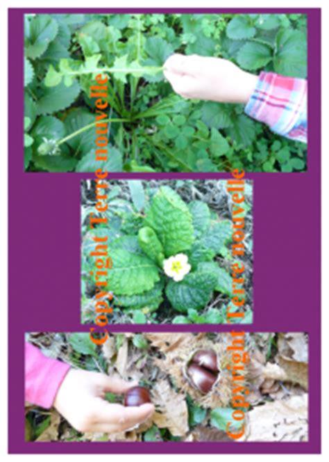 survivalisme familial 3 plantes sauvages comestibles