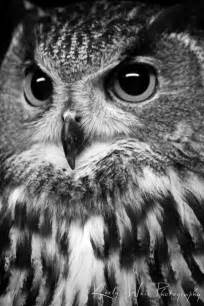 Black White Owl Photography