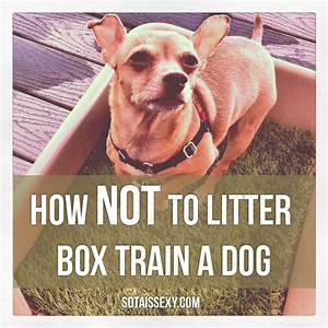 Chihuahua in a litter box animals pinterest for Litter box training a dog