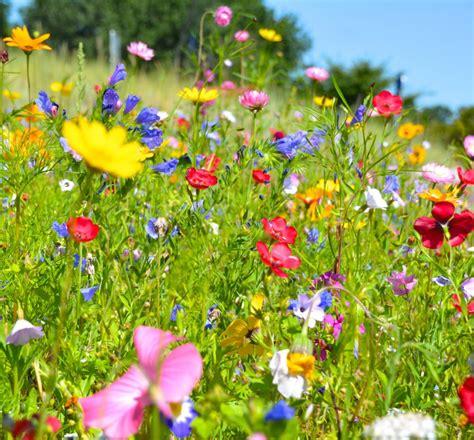 Mehrjährige Blumen Die Den Ganzen Sommer Blühen by Mehrj 228 Hrige Blumen Die Den Ganzen Sommer Bl 252 Hen
