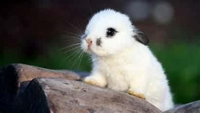 Wallpaperup Bunnies Animals