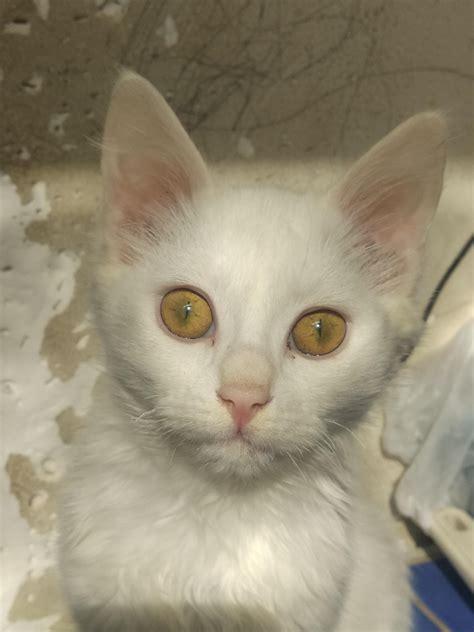 reddit cat cats animals meet purry lovers