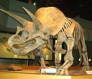 Are These Extinct Prehistoric Animals Still Alive Today ...