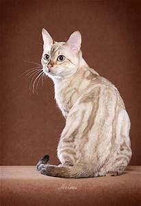 Cats La : savannah bengal cats and kittens for sale urban safari cattery ~ Orissabook.com Haus und Dekorationen