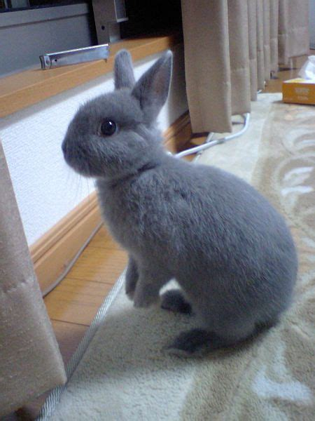 25 best ideas about rabbit breeds pet bunny rabbits breeds of rabbits and rex
