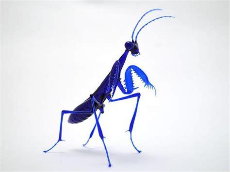 mantis images  pinterest praying mantis