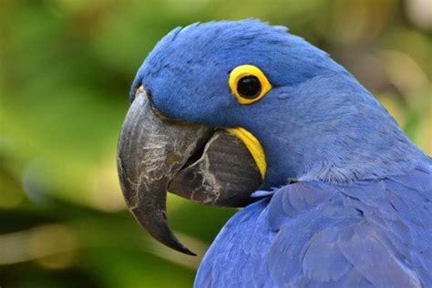 Galapagos Machu Picchu Tours & More