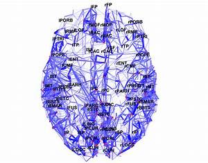New Map Ids The Core Of The Human Brain
