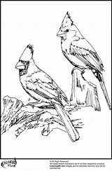 Cardinal Coloring Pages Birds Winter American Printable Cardinals Drawing Bird Adult Drawings Sheets Crafts Louisville Wood Getdrawings Adults Colouring Sheet sketch template