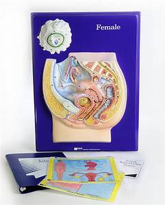Scott Resources  U0026 Hubbard Scientific Female Reproductive